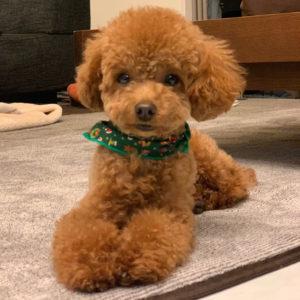 愛犬パル子